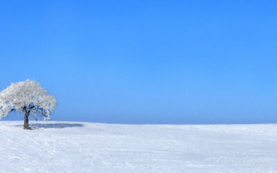 That Tree--Winter   (This image is in panoramic format)
