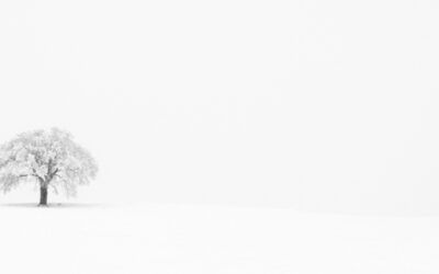 That Tree--Hoarfrost & Fog   (This image is in panoramic format)