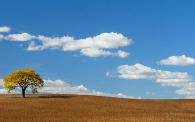 That Tree--Autumn   (This image is in panoramic format)