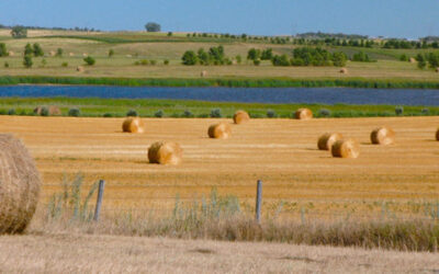 Panoramic Bales #3   (This image is in panoramic format)